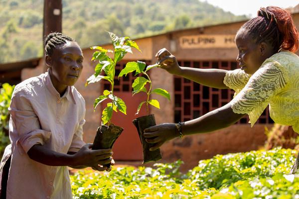 Agricultores y trabajadores de Fairtrade de todo el mundo manifestaron que el cambio climático es una amenaza inmediata para sus medios de vida y para productos apreciados en todo el mundo, como el café, el cacao y los plátanos. En una carta abierta a los líderes mundiales, 1,8millones de agricultores y trabajadores de Fairtrade reclaman medidas, entre ellos, estos agricultores fotografiados en Kenia. De cara a la COP26, se invita a los consumidores de todo el mundo a alzar la voz de los agricultores firmando una petición. Créditos: Fairtrade Países Bajos y Fairtrade
